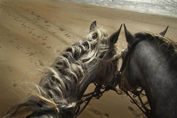 Beach Horses by Jesus del Toro Garcia via Flickr
