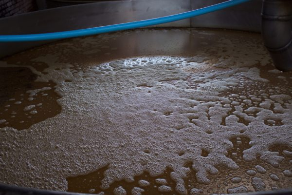Fermenting tequila