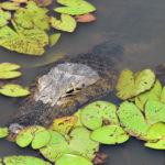 Brazil's Pantanal in Photos